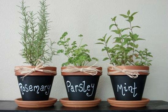 Wonderful THK DIY Herb Garden1